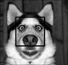 Detected Doggy